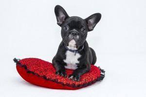 affidamento del cane in caso di separazione